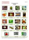 Italian Food Vocabulary - Vegetables